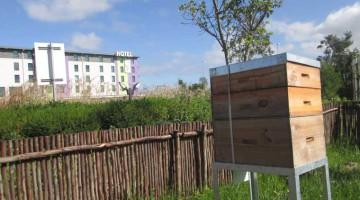 Hotel Verde Beehives